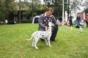 Dalmatiner spesialen 2011